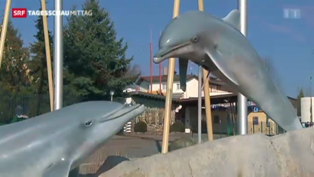 Video «Todesursache von zwei Delfinen geklärt» abspielen