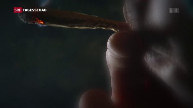 Video «Legalisierung von Cannabis» abspielen
