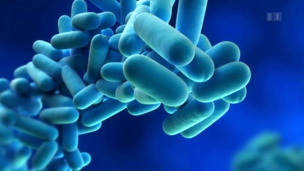 Video «Legionellen - Risiko aus der Wasserleitung» abspielen