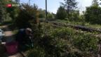 Video «FOKUS: Rodewald schützt das Grün» abspielen