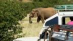 Video «Bei den Elefanten» abspielen
