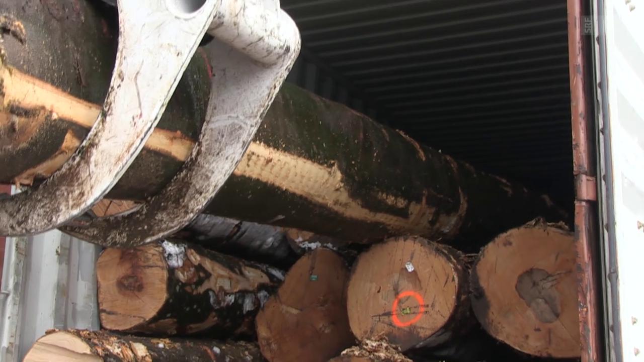 Schweizer Holzwirtschaft unter Druck: Importe nehmen zu