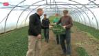 Video «Veränderte Essgewohnheiten schmälern Einkommen der Bauern» abspielen