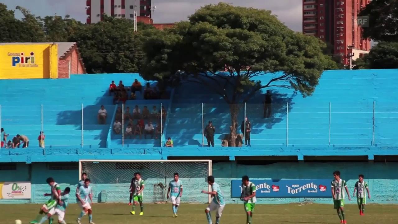 Baum in Stadiontribüne (sntv)
