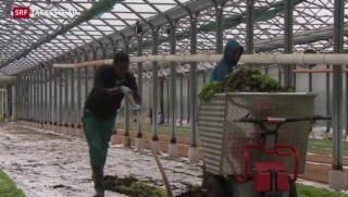 Video «Flüchtlinge sollen in der Schweiz arbeiten dürfen» abspielen