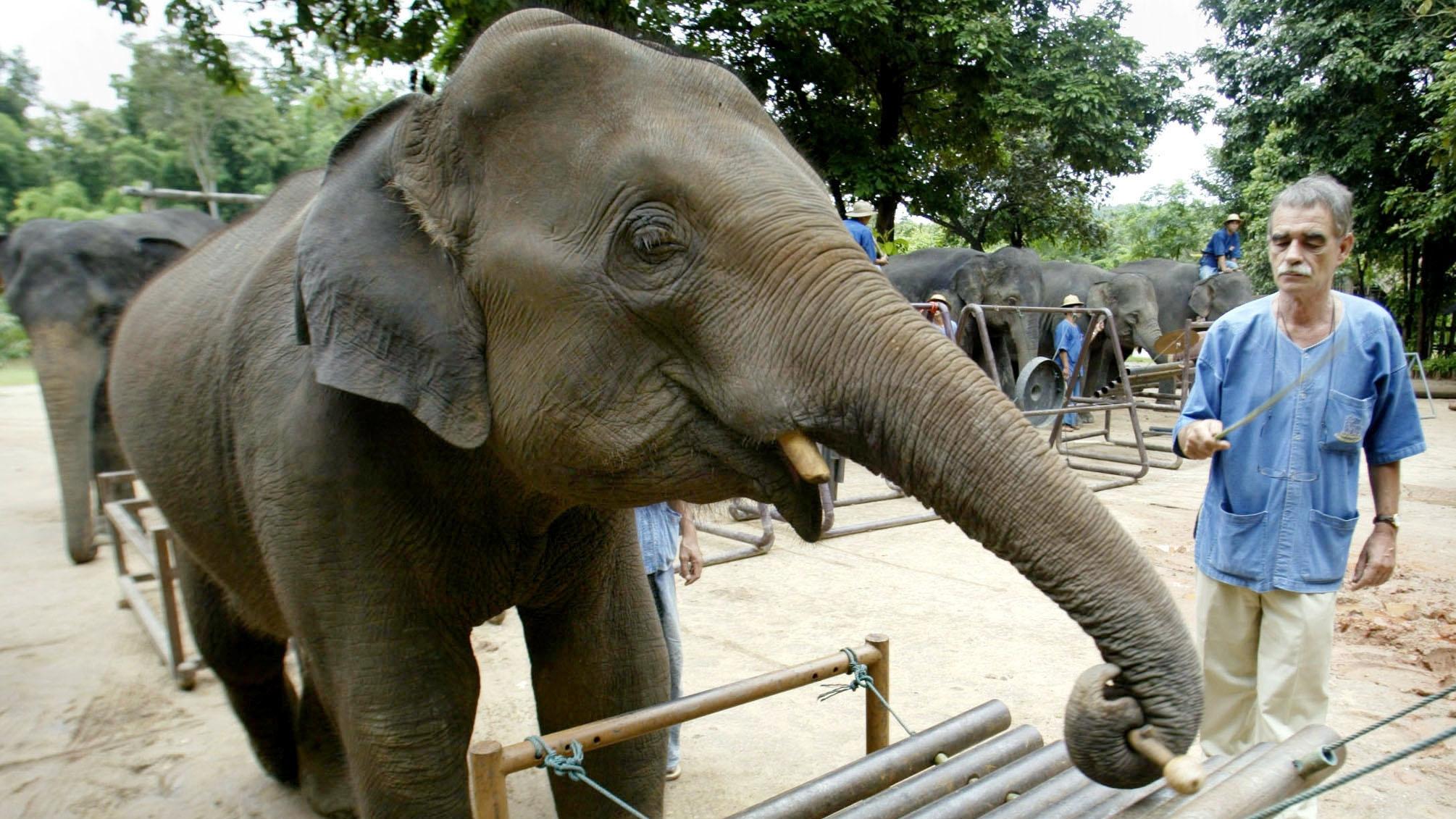 Das Thai-Elefantenorchester: Eine vorbildliche Therapie-Form?