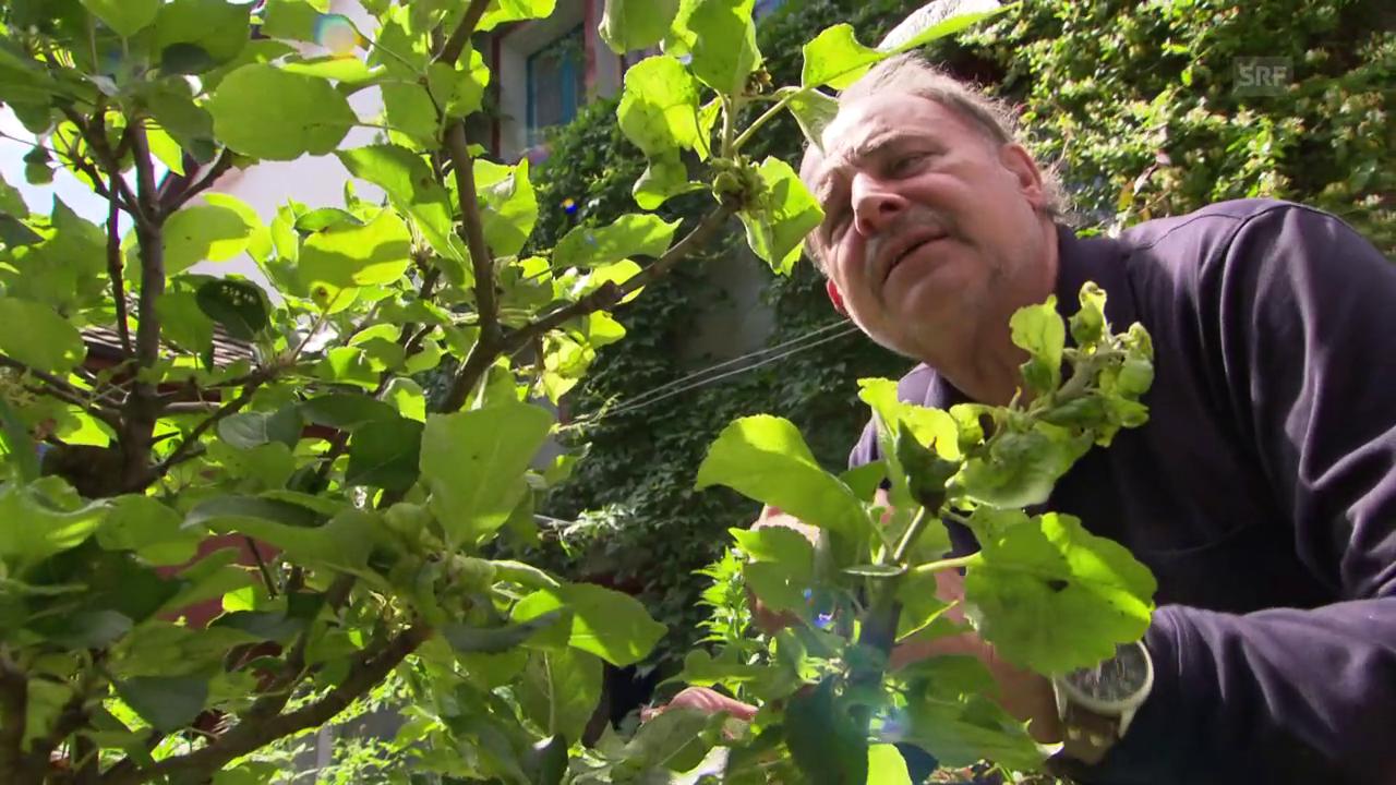 Heinrich Müller: Dschungel-Feeling auf dem Pfannenstil