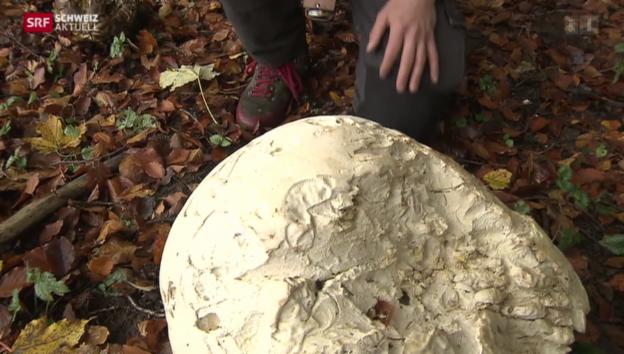 Video «Schweiz aktuell vom 25.10.2013» abspielen