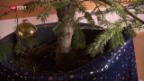 Video «Gemietete Weihnachtstanne» abspielen