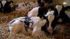 Video «Antibiotika im Stall» abspielen