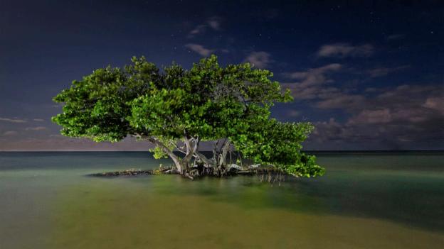 Video «Wälder unserer Erde» abspielen