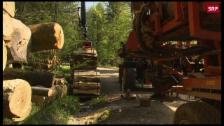 Link öffnet eine Lightbox. Video Forstwirtschaft in der Krise abspielen