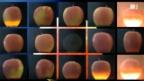 Video «Infrarot entlarvt schadhafte Äpfel» abspielen