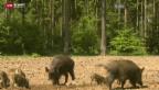 Video «Aargauer Bauern unzufrieden» abspielen