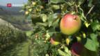 Video «Frühe Apfelernte» abspielen