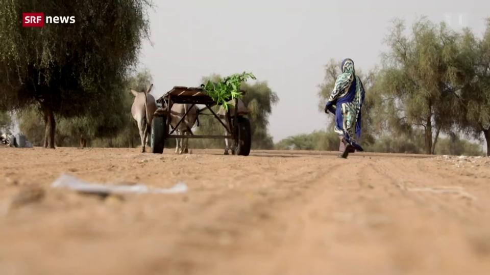 Senegal: Bäume der Hoffnung