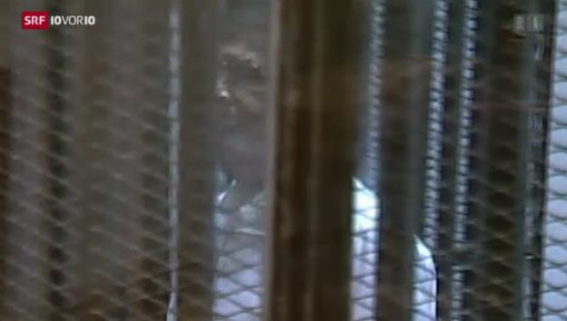 Video «Harte Urteile in Ägypten» abspielen