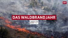 Link öffnet eine Lightbox. Video 2017 – das Waldbrandjahr abspielen