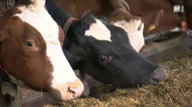 Video «Beitrag vom 1.2.2011: Soja statt Gras schadet der Milchqualität» abspielen