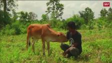Link öffnet eine Lightbox. Video Kambodschanische Reinkarnation abspielen