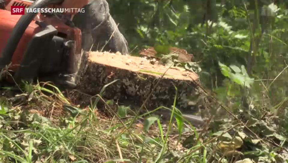 Rahmenbedingungen werden sich für Schweizer Wälder verschlechtern