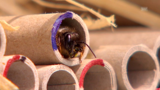 Video «Bienensterben: Pestizide rücken in den Fokus» abspielen