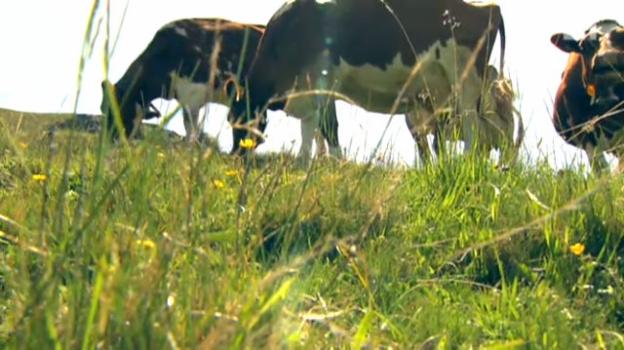 Video «Kuhmangel bedroht Artenvielfalt» abspielen
