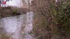 Video «Wiederholte Bachverschmutzung bei Romanshorn» abspielen