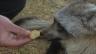 Link öffnet eine Lightbox. Video Löffelhund Fatty und die Medizin abspielen