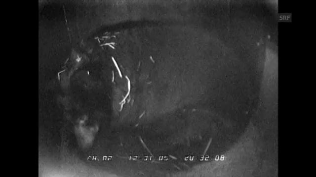 Silvesterfeuerwerk in Fairbanks: Der Bär reagiert im Schlaf