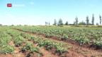 Video «Wenig Aussicht auf Erfolg: Farmer in Simbabwe» abspielen