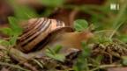 Video «Schnecken-Aktion zum Darwin-Jahr» abspielen