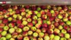 Video «Äpfel im Tiefschlaf» abspielen