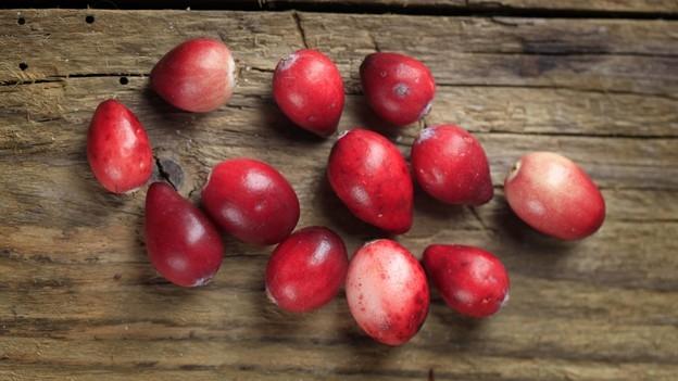 Cranberrys gegen Blasenentzündung – Mehr Mythos als Wirkung