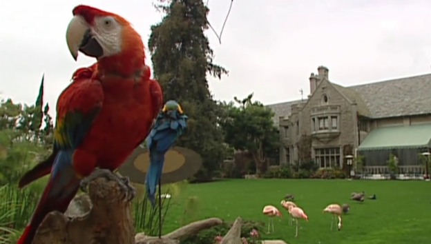 Video «Playboy-Mansion soll verkauft werden» abspielen