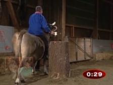 Video «Bruno Isliker auf Kuh Sybille» abspielen