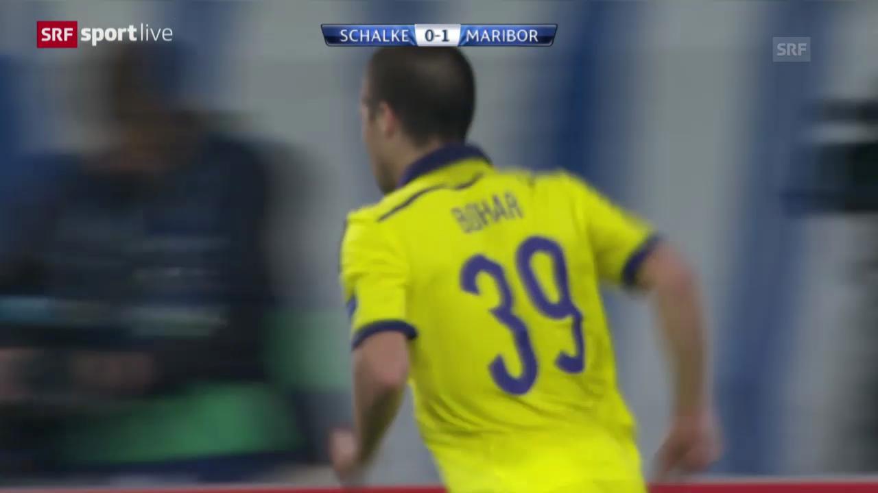 Fussball: CL, Schalke-Maribor