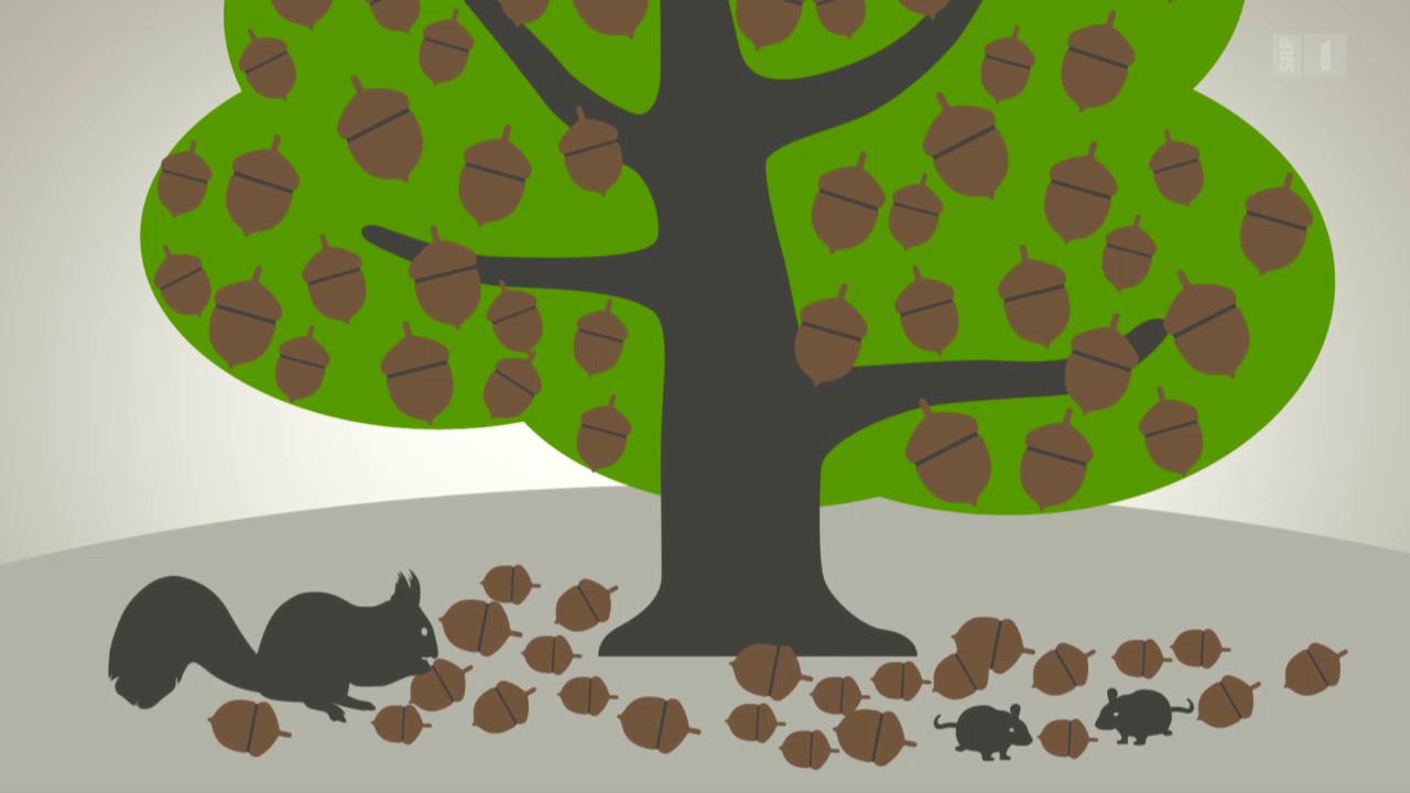 Lebensraum Baum