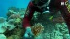 Video «Fische fangen für Aquarien» abspielen