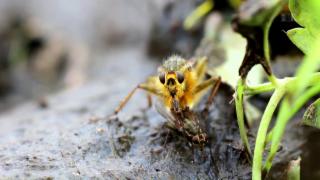 Video «Gartenjahr 2016: Vom Wert der Insekten im Garten » abspielen