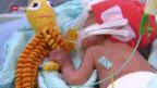 Video «Oktopusse für Frühgeborene» abspielen