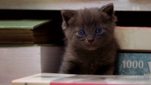 Video «Das geheime Leben unserer Haustiere (1/8)» abspielen