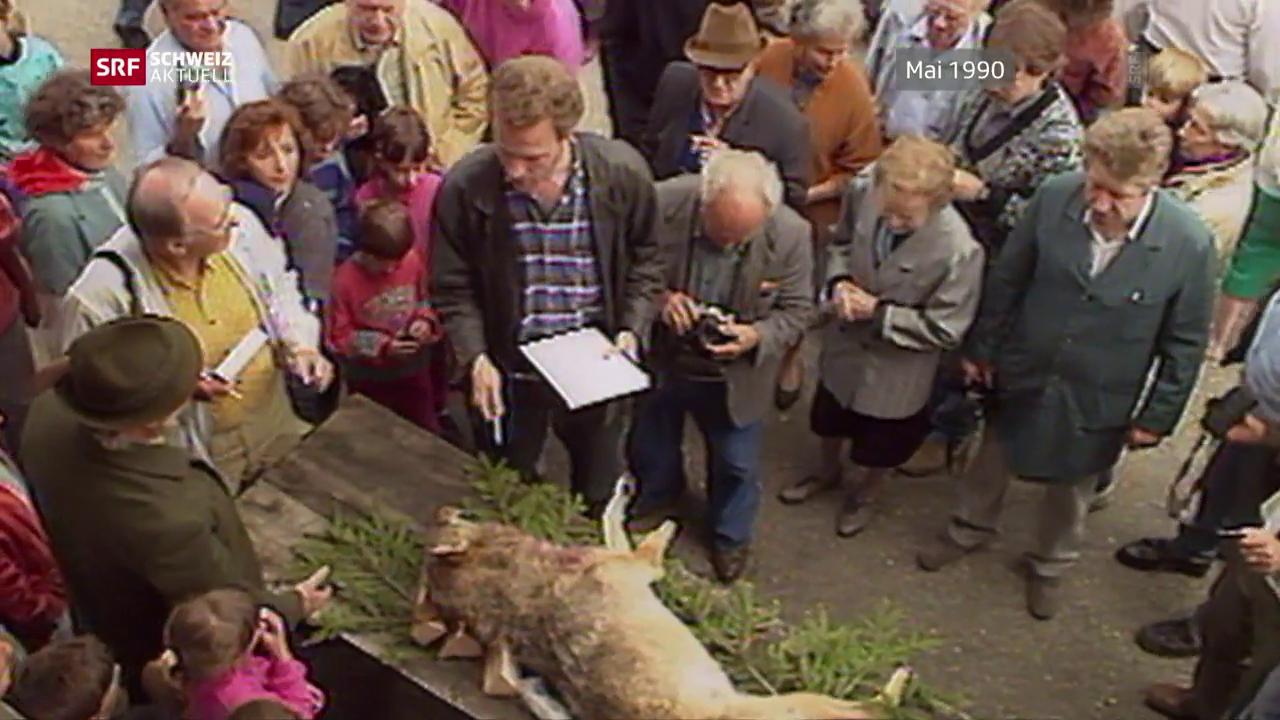 Der Wolf von Hägendorf