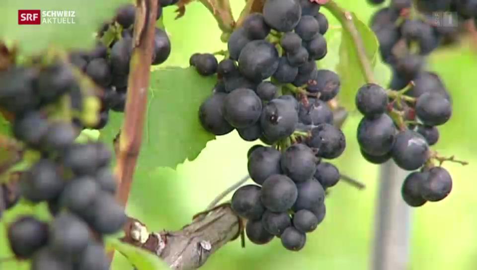 Arbeitsgruppe für bessere Wein-Kontrollen im Wallis