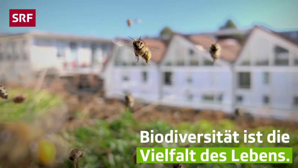 «Mission B»: Was ist eigentlich Biodiversität?