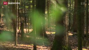 Video «Schweizer Wäldern geht es gut» abspielen