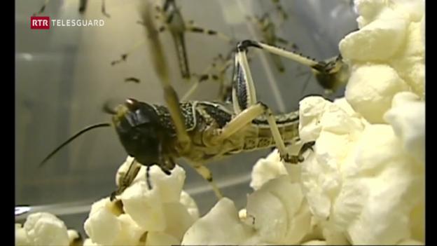 Laschar ir video «Insects per il futur dal mund»