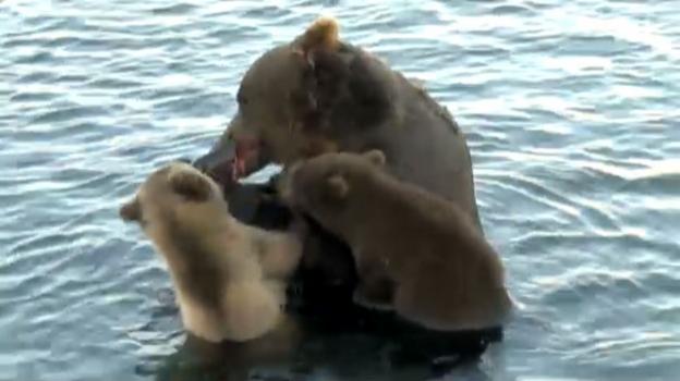 Video «Die Suche nach Sky – Reno Sommerhalder im Bärenland Kamtschatka» abspielen