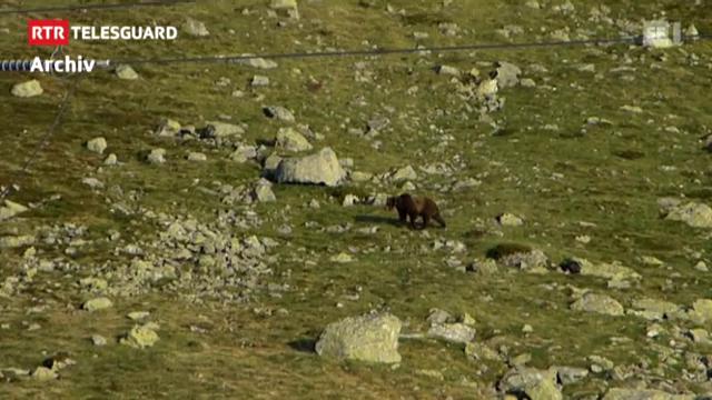 l'urs m13 è rut en en ina chasa da vacanzas