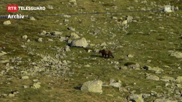 Laschar ir video «l'urs m13 è rut en en ina chasa da vacanzas»